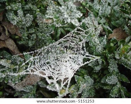 Frost Covered Spiders Web #5151253