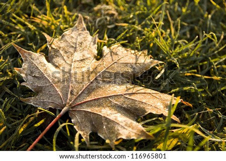 frost on a brown dry leaf
