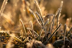 frost on grass in the morning on a meadow, taken this autumn on a first frosty morning, ideal background with a soft golden light