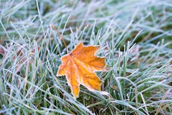Frost on the leaf and grass