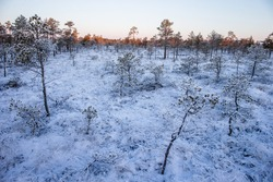 Frosted marsh and pine trees at sunrise in Winter