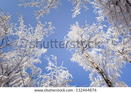 Frosted, snow-covered trees. In the background, a blue, cloudless sky. Winter landscape.