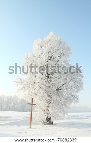 Frosted tree against a blue sky at dawn. Photo taken in December.