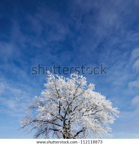 Frosted tree against sky, low angle view