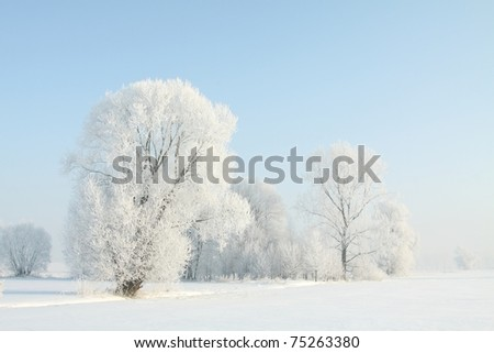 Frosted trees against a blue sky on a sunny morning.