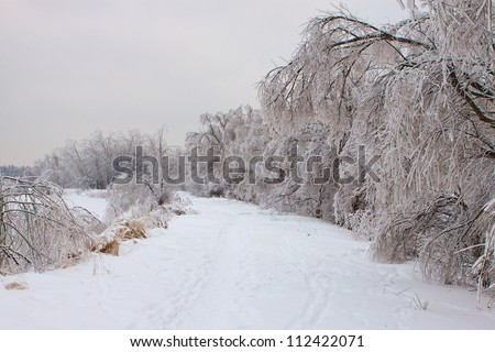 frosted winter trees on the shores of icy pond