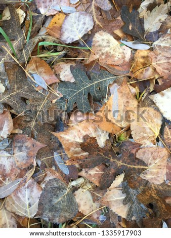 Frosty fall leaves on ground #1335917903