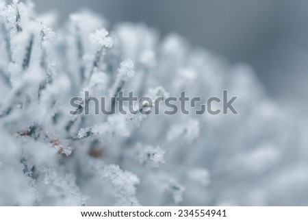 frosty fir twigs in winter covered with rime, closeup photo #234554941