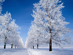 frosty frozen yogurt holiday iceland scapegoat light mountain nature outdoor season sky snow snowfall tree weather white winter cold amp cold christmas blue background