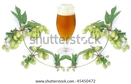 frosty golden beer in glass and hops-plant on white background