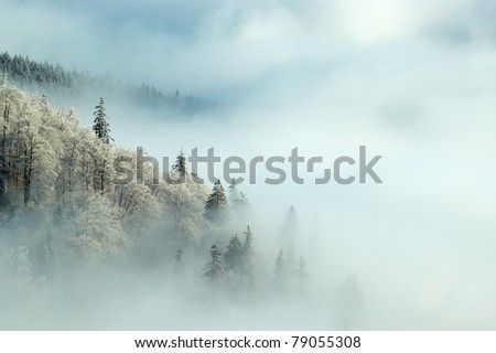 frosty morning forest