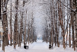 Frosty snow alley in the winter Park with benches. Trees covered with snow. Walking in the fresh air. Selective focus.
