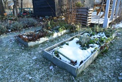 Frosty vegetable garden or allotment garden bed with snow covered plants and herbs. Backyard garden bed winter first snow