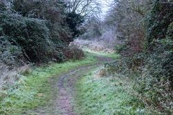 Frosty walk through a forest