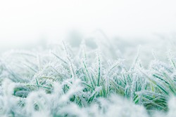 Frosty winter garden macro. Cold weather background concept. Frozen grass on the meadow with copy space.