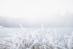 Frosty winter morning macro. Cold weather background concept. Frozen grass on the fields with copy space.