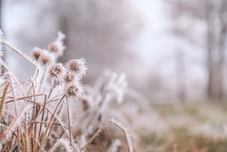 Frosty winter nature abstract closeup with blurred background. Frozen winter foliage, cold weather, seasonal natural closeup forest details