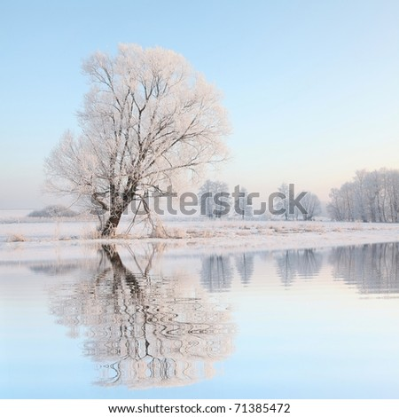 Frosty winter tree against a blue sky with reflection in water.