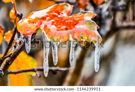 Frozen autumn leaf close up. Icy autumn leaf macro. Frzen autumn leaf macro view