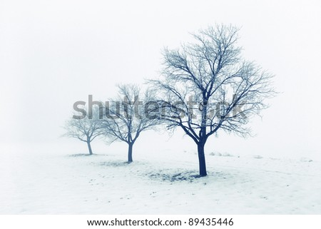 Frozen bare trees in snow