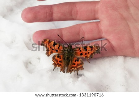 Frozen butterfly waiting for warm in child's hands; Bright butterfly on the white snow. Winter and summer symbols on the one picture; Nature miracle; Springtime is coming; not in time to be born