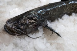 Frozen catfish in ice on a shop window. Freshwater fish.