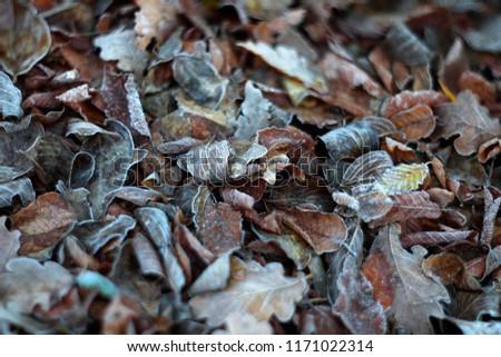 Frozen fallen leaves with mild focus.