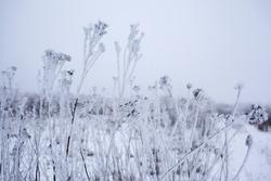 frozen field