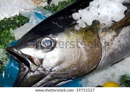 Frozen fish head in a fresh fish market stock photo for Best frozen fish