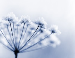 Frozen flower in blue tone, very shallow focus