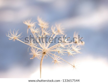 Frozen flower in winter coldness seasonal background - Shutterstock ID 133657544
