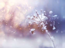 Frozen flower twig in beautiful winter snowfall crystals glitter background