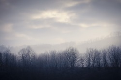 frozen forest in cold morning with mist and clouds on the sky