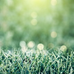 Frozen grass background with bokeh