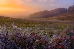 Frozen grass in autumn morning nature, beautiful scenery, edit space