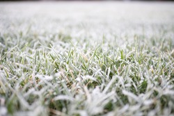 Frozen grass tips on cold morning