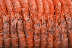 frozen king prawns, macro background seafood, fresh red prawns