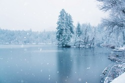 Frozen lake in snowy forest. Black forest, Germany.