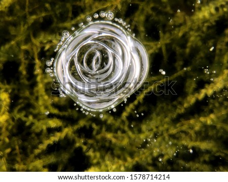 Frozen lake water with air bubbles in the form of abstract flowers, roses and other patterns in the ice. on the background of green algae and dark bottom. Drawing on ice frost formed. For design