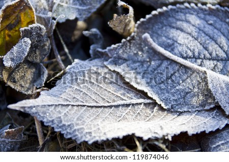 frozen leaves lying on the ground