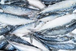 Frozen mackerel background. Frozen group of fish. Iced fish. Heap of mackerel. Mackerel pattern. Mackerel texture. Fish background