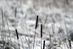 Frozen Marsh Area on an Overcast Day, Lithuania