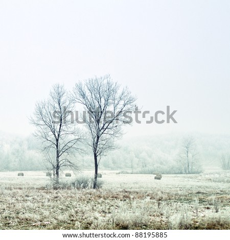 Frozen meadow and trees in winter