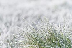 Frozen morning grass. Winter meadow.