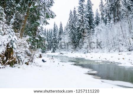 frozen mountain river in spruce snowy forest #1257111220