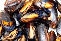Frozen mussel in the shell. Freshly-frozen mussels in shells close-up. The mussel in the sink is ready to be cooked. Plate with mussels. Mussel shells lie on the plates close-up.