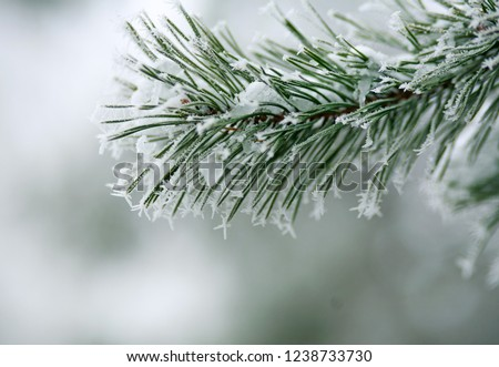 Frozen needles of pine tree branches in winter with patterns floes, background beauty in nature #1238733730