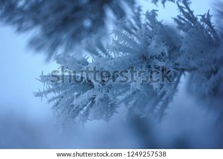 Frozen pine needles #1249257538