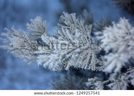 Frozen pine needles #1249257541