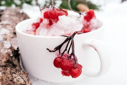 Frozen red berries of viburnum close-up in a white mug standing on the snow. Fir-tree branches in the background. Winter, Christmas and Happy New Year concept. Natural vitamins.